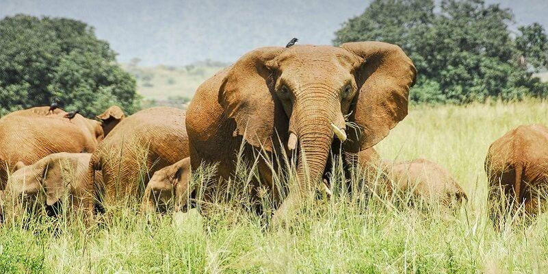 Akagera National game park