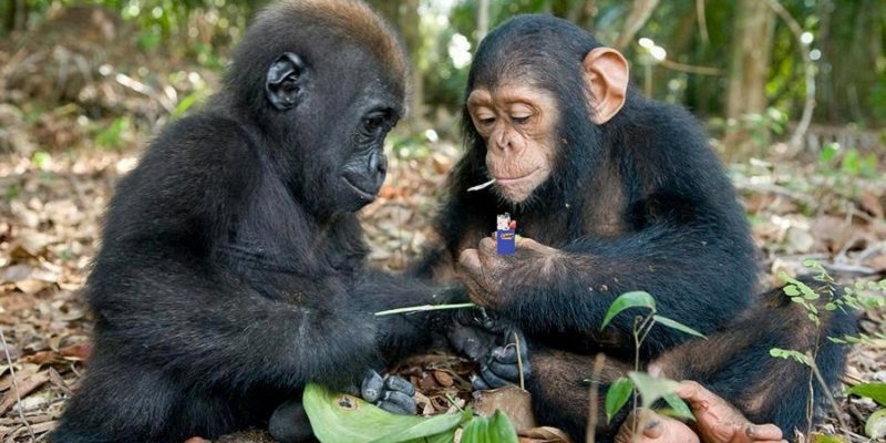 top things to do on a Rwanda Safari