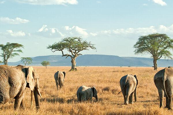 3 days Akagera national game park
