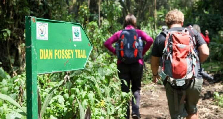 dianne fosey hike-hero