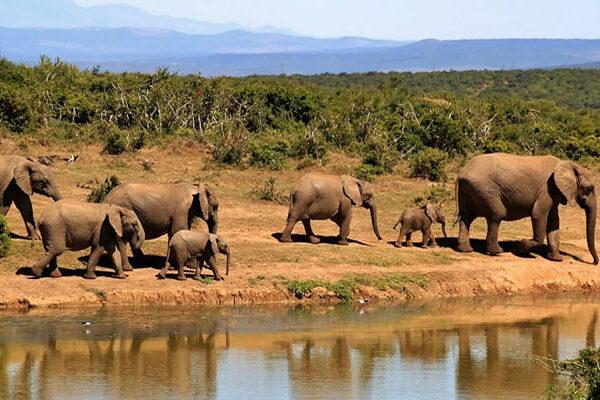 2 days Akagera wildlife safari