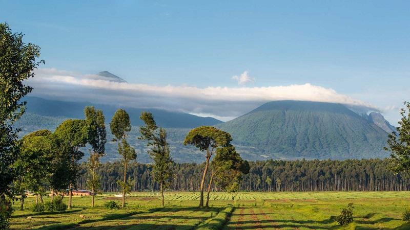 best time to visit Rwanda for gorilla trekking