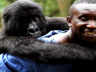 Andre-With-Gorilla-Virunga-National-Park