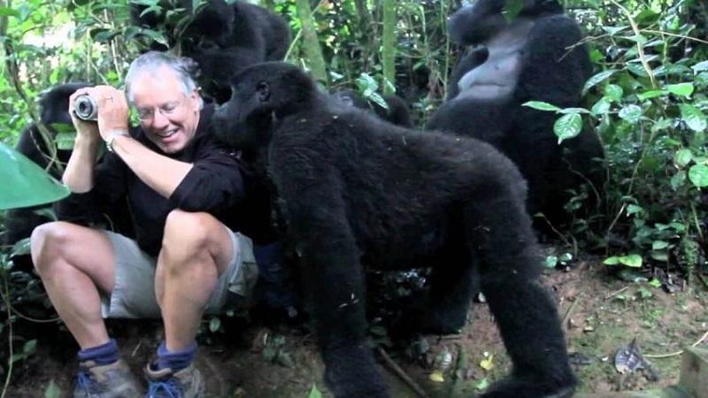gorilla-habituation-experience-1-750x450