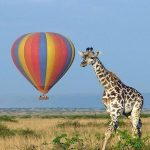 Hot Air Balloon Over Murchison Falls National Park