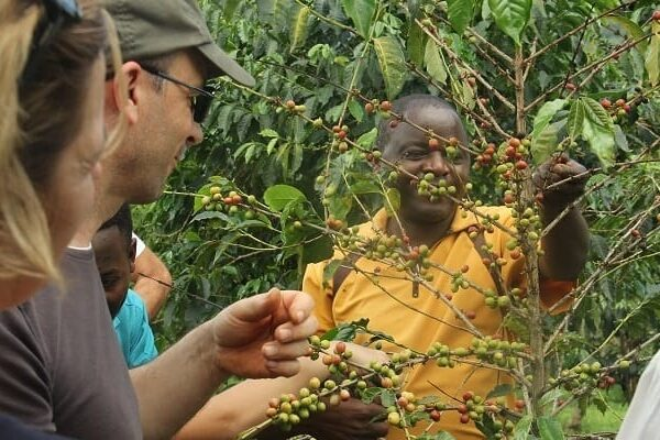 rwanda coffee tours