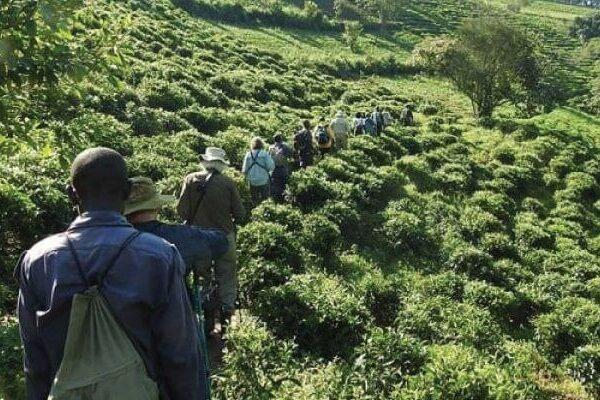 bwindi-forest-gorilla-trekking-e1565274555992